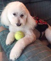 Tennis Dog
