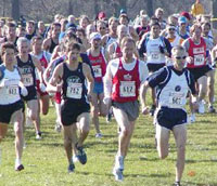 Photo of a cross country race