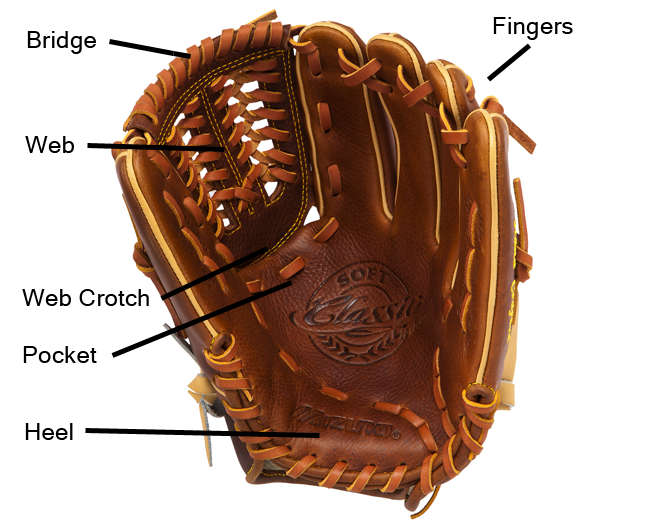 Basic anatomy of a glove